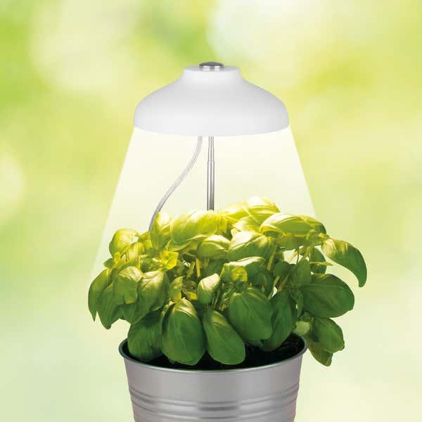 MAXXMEE LED-Pflanzenleuchte mit Telskopstab, ca. 11x11x4cm