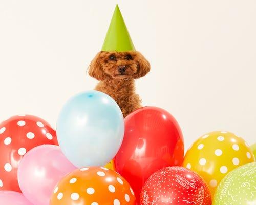 Ballons, Luftschlangen und mehr